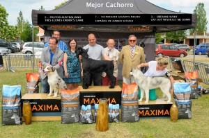 MEJOR CACHORRO DE LA EXPO
